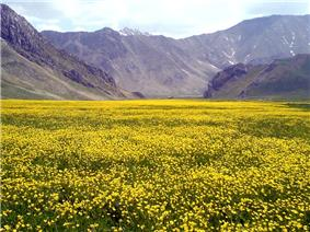 Yellow plain in Lar National Park.jpg
